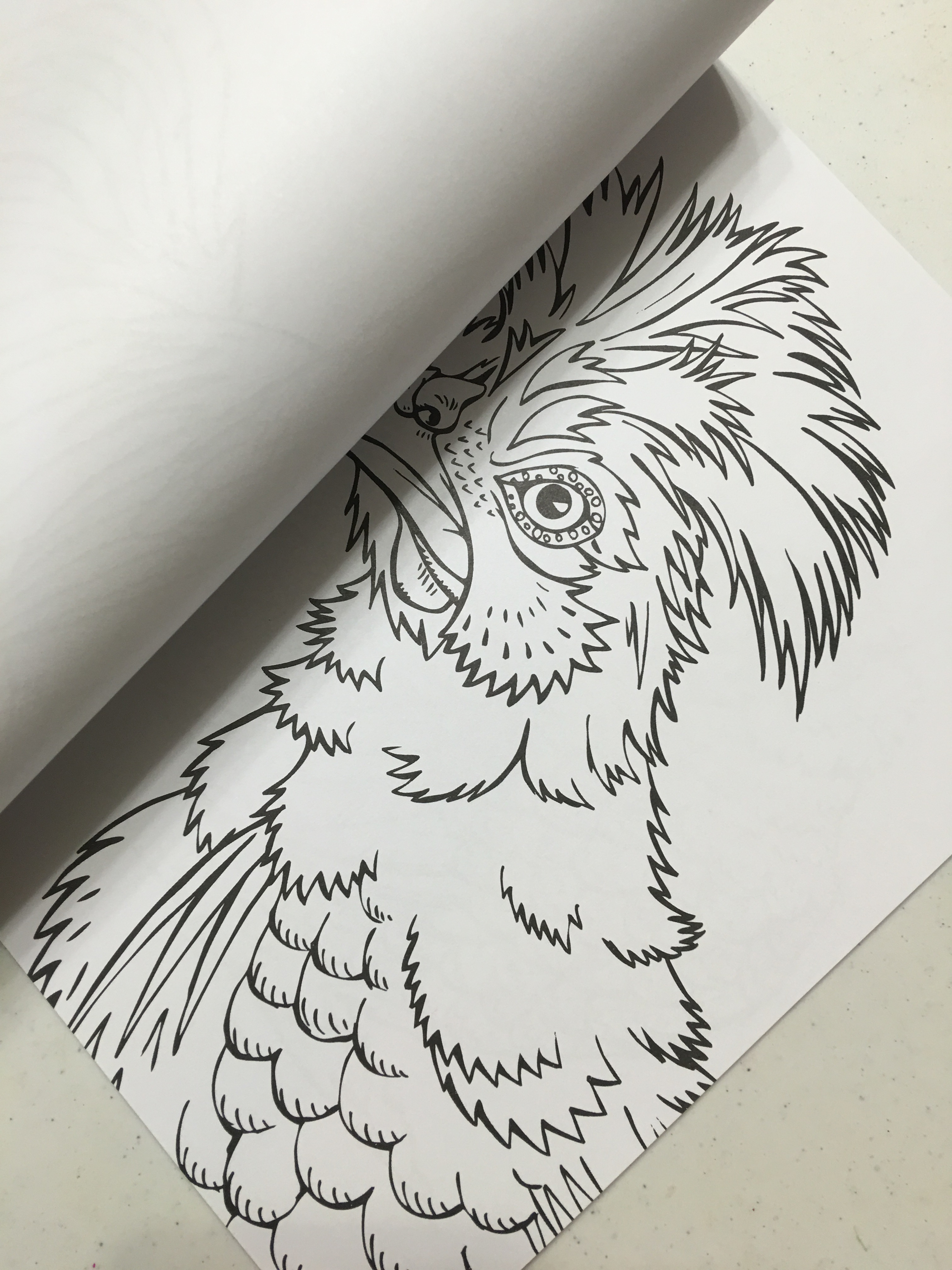 exotic chickens coloring book is something to crow about u2013